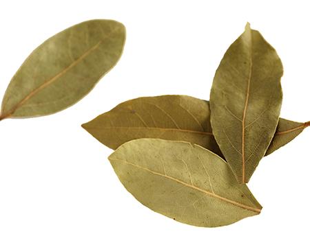 foglie di alloro