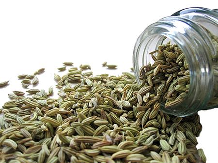 semi di finocchio selvatico